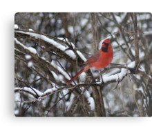 Beauty in the Snow. Metal Print