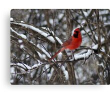 Beauty in the Snow. Canvas Print