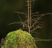 Tree on Tree   by Tony Waite