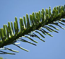 Point to the Sky by Diana Symes