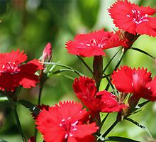 Reds by Diana Symes