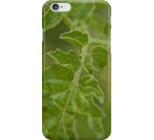 Tomato Plant Leaf Macro (1) iPhone Case/Skin