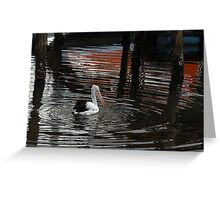 Pelican Narooma NSW> Greeting Card