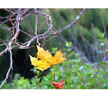 Season colours Photographic Print