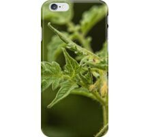 Tomato Plant Leaves Macro (2) iPhone Case/Skin