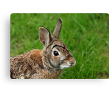 Big Eared Brown Eyed Cottontail Canvas Print