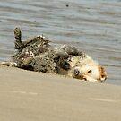 Sorry dad! Megan on Bannow Beach by Andrew Jones