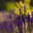 blurry flowers by Kevin Williams
