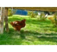 Frac Chicken  Photographic Print