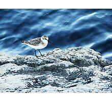 Sand Piper Photographic Print