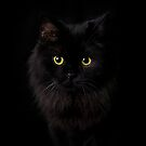 """""""Black """" by CanyonWind"""