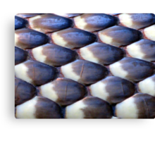 Scales of a Blue-bellied Black Snake Canvas Print