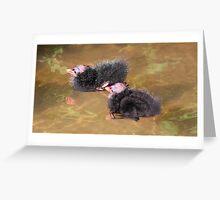 Moorhen chicks (1 set of 4) Greeting Card