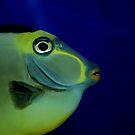 Fishy by cshphotos