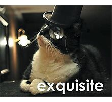 Exquisite Cat Photographic Print
