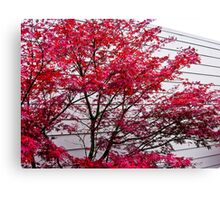 fall lines Canvas Print