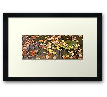 The Paddle Framed Print