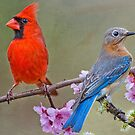 Red Bird, Blue Bird by Bonnie T.  Barry