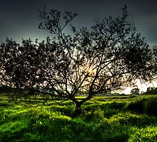 The Burnsall Tree by baddoggy