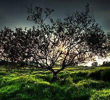 The Burnsall Tree by baddoggy