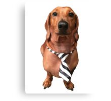 Dachshund Sausage Dog wearing tie Canvas Print