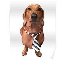 Dachshund Sausage Dog wearing tie Poster