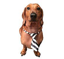 Dachshund Sausage Dog wearing tie Photographic Print
