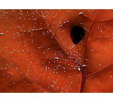 Symbiosis Photographic Print