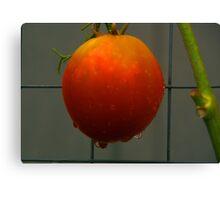 Ripe Tomato Canvas Print