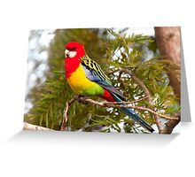 All the Beautiful Colours Greeting Card