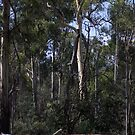 Grassed flat on Diamond Creek Trail 201501061413  by Fred Mitchell