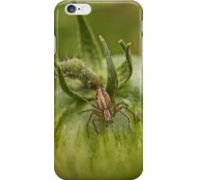 Spider on a Green Tomato iPhone Case/Skin