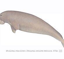 Sea Cow (Dugong dugong) by StickFigureFish