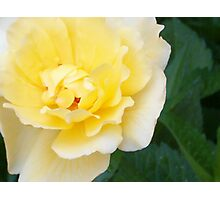 A Yellow Rose For You Photographic Print