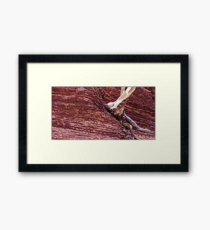 Tree from rock Framed Print