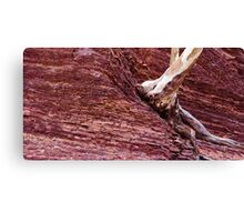Tree from rock Canvas Print