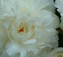 Beautiful Peonies For You by Dennis Knecht