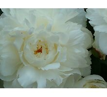 Beautiful Peonies For You Photographic Print