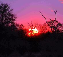 TYPICAL AFRICAN SUNSET by Magriet Meintjes