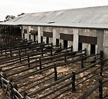 shearing shed by MagnusAgren