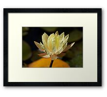 Winery Flower Framed Print