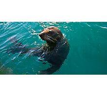 Seal Posing Photographic Print