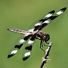 Dragonfly by BigD