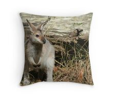 Wallaby Two Throw Pillow