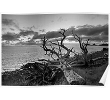Dead Tree Lord Howe Island Poster