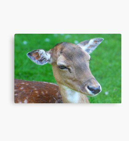 Deer........... Metal Print
