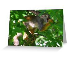 Squirrel monkey Greeting Card