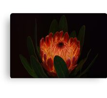 Glowing Protea Canvas Print