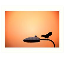 Sunset Bird Art Print