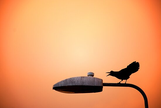 Sunset Bird by Donncha O Caoimh
